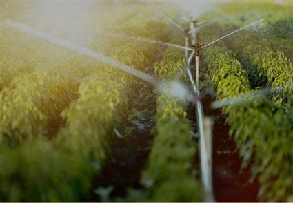 sistemas agroalimentarios