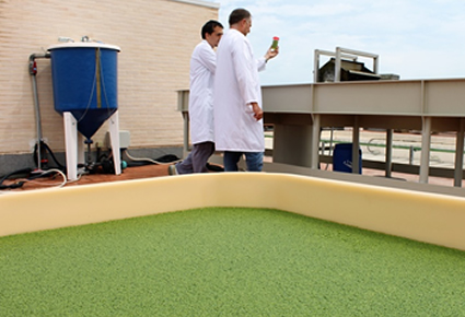 Lemna in algae biorefinery conference (Brussels)
