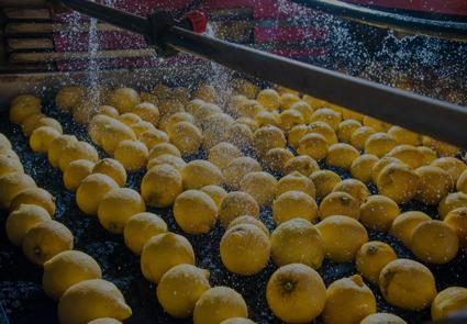 limpieza citricos