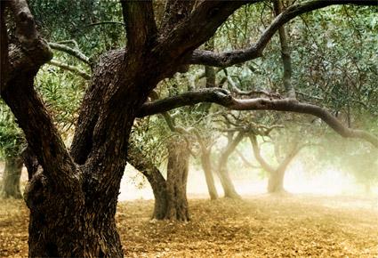 Soluciones biológicas olivar